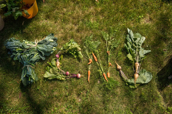 TCNJ's Campus Garden harvests a bounty for local food pantries